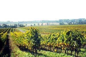 charente maritime Le Vignoble de chez PICHE, Chambre d'hôtes à la ferme,campagne